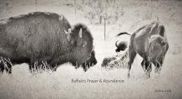 Buffalo's Prayer