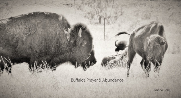 Buffalo's Prayer